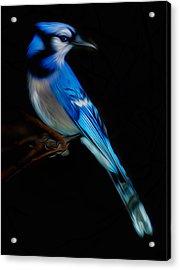 Jj Blue Acrylic Print