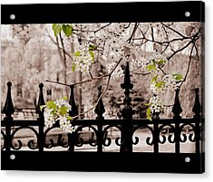 Joyce's Trees Acrylic Print by JAMART Photography