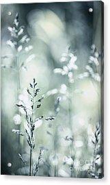 June Grass Flowering Acrylic Print by Elena Elisseeva