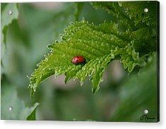 Ladybug Acrylic Print by Ellen Henneke