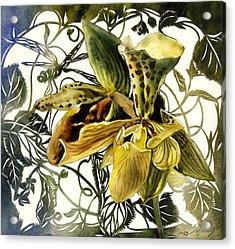 Ladyslipper Orchid Acrylic Print