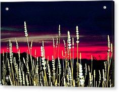 Lavender Sunset Acrylic Print by Mavis Reid Nugent