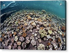 Leather Corals Acrylic Print