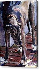 Legs Acrylic Print by Molly Poole