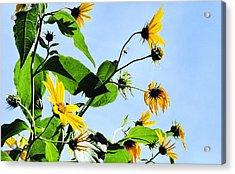 Let It Bee Acrylic Print
