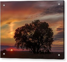 Light Pillar And Cottonwood Acrylic Print by Rob Graham
