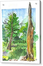 Lightening Strike Tree Acrylic Print