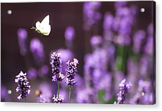 Lilac Lavender Afternoon Acrylic Print
