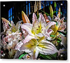 Lilies Out Of The Shadows Acrylic Print