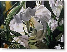 Lily In White Acrylic Print by Alfred Ng