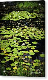 Lily Pads On Dark Water Acrylic Print