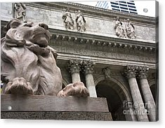 Lion New York Public Library Acrylic Print by Amy Cicconi