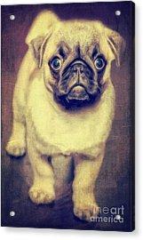 Little Dog Acrylic Print