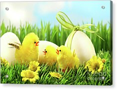 Little Yellow Easter Chicks In The Tall Grass  Acrylic Print by Sandra Cunningham
