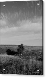 Lonely In The Field Acrylic Print by Robert Geier