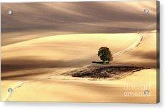 Lonely Tree Acrylic Print by Jaroslaw Blaminsky