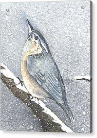 Lonesome Winter Acrylic Print