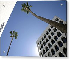 Acrylic Print featuring the photograph Looking Up In Beverly Hills by Cora Wandel
