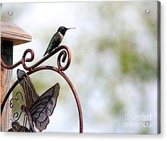 Lookout Acrylic Print