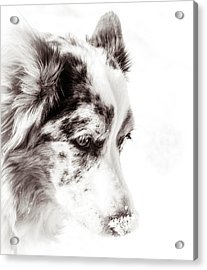 Maggie Acrylic Print by Cathy Donohoue