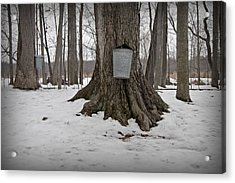 Maple Sugaring Acrylic Print by John Stephens
