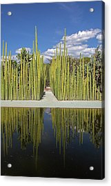 Mexican Fence Post Cacti Acrylic Print by Jim West