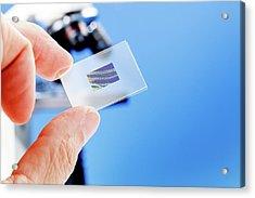 Microscope Slide Acrylic Print by Wladimir Bulgar