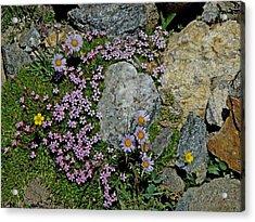Miniature Rock Garden Acrylic Print by George Tuffy