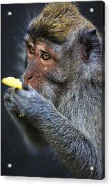 Monkey - Bali Acrylic Print