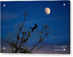 Moonrise Perch Acrylic Print