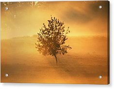 Morning Fog Acrylic Print by Linda Segerson