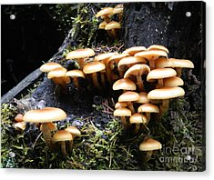 Mushrooms On A Stump Acrylic Print by Chalet Roome-Rigdon