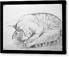 My Pet Cat Acrylic Print