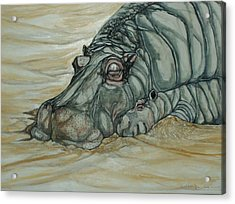 Nap Time Acrylic Print by Anne Buffington