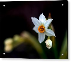 Narcissus Tazetta Acrylic Print by Stelios Kleanthous