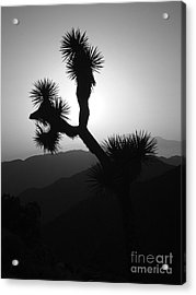 New Photographic Art Print For Sale Joshua Tree At Sunset Black And White Acrylic Print