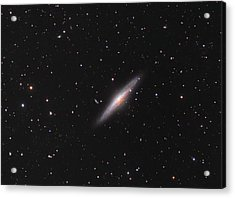 Ngc 2683 Spiral Galaxy Acrylic Print by Celestial Images
