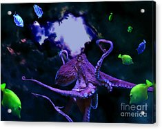 Octopus Acrylic Print by Steed Edwards