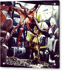 #octopus #tennesseeaquarium #aquarium Acrylic Print
