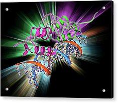 Oestrogen Receptor Bound To Dna Acrylic Print by Laguna Design