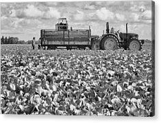 Acrylic Print featuring the photograph On The Farm by Ricky L Jones