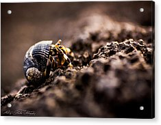 On The Move Acrylic Print by Hastings Franks