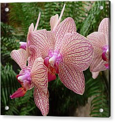 Orchid No.7 Acrylic Print by Gregory Young