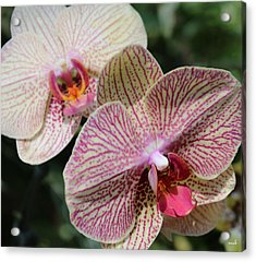 Orchid Two Acrylic Print by Mark Steven Burhart