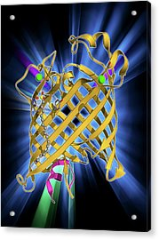 Outer Membrane Phospholipase A Molecule Acrylic Print by Laguna Design