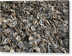 Oyster Shells After Processing Acrylic Print