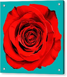 Painting Of Single Rose Acrylic Print by Setsiri Silapasuwanchai
