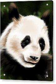 Panda Acrylic Print by Veronica Minozzi