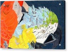 2 Parrots Acrylic Print by Bav Patel