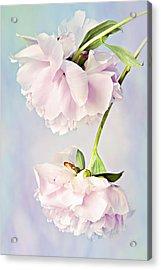 Pastel Peonies Acrylic Print by Theresa Tahara